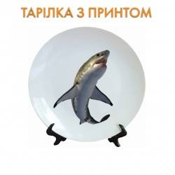 Тарелок Shark with white belly