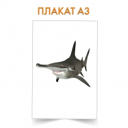 Плакат Shark with funny nose