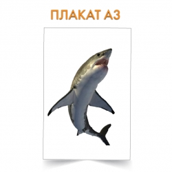 Плакат Shark with white belly