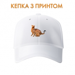 Кепка Abissianian cat