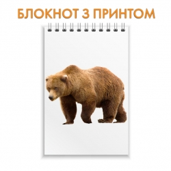 Блокнот Brown bear